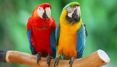 Papoušci mluví