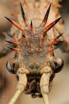 : Photo by Photographer Igor Siwanowicz - macro photos Macro Fotografie, Fotografia Macro, Cool Insects, Bugs And Insects, Micro Photography, Cool Bugs, Insect Art, Beautiful Bugs, Weird Creatures
