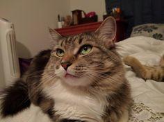 Green-Eyed GoddessMore Cute Cats