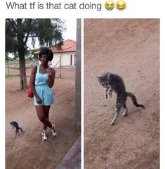 What is this cat doing? - more at megacutie.co.uk Humor, drollery, humour, funny memes, funny pics, funny picturesTap the link to check out great cat products we have for your little feline friend! #CatFunny
