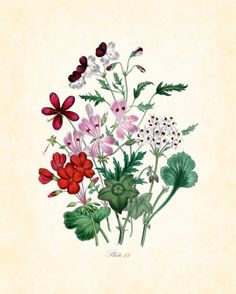 Antique British Botanical Art Print Series 2 Plate 15 Home and Garden Decor Illustration 8 x 10 Art Print. $10.00, via Etsy.