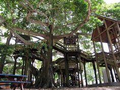 Casa del Arbol a Parque del Colon en Aguadilla, Puerto Rico Puerto Rico Island, Puerto Rico Trip, Puerto Rico History, San Juan Puerto Rico, Columbus Park, Puerto Rican Culture, Enchanted Island, Puerto Ricans, Beautiful Islands