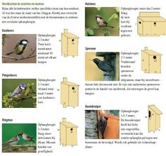 Bird House Kits Make Great Bird Houses Homemade Bird Houses, Bird Houses Diy, Bluebird House Plans, Bird House Feeder, Bird House Kits, Bird Aviary, Bird Boxes, How To Attract Birds, Backyard Birds