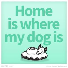 Home is where my dog is. - Mutts
