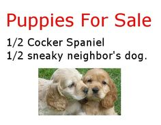Puppies For Sale?!!