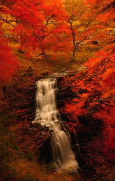 Autumn - these colors are amazingly vibrant