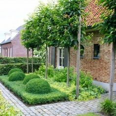 Tuinmeesters - projecten Small Garden Design, Front Elevation, Garden Spaces, Sidewalk, Landscape, Architecture, Open Spaces, Plants, Outdoors