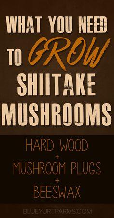 What You Need to Grow Shiitake Mushrooms -- Blue Yurt Farms #homesteading #fresh