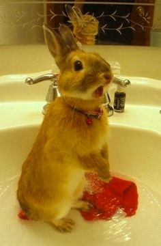"""For anyone interested in seeing a startled rabbit in a sink, here's a startled rabbit in a sink."""