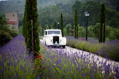 Wedding in Tuscany wedding planner in Tuscany Italy, dream villas for an Italy wedding you'll remember