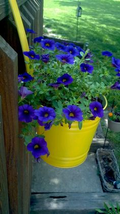 I sprayed painted all 4 yellow these purple flowers look so good in them.