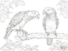 African Grey Parrots coloring pages free to print Bird Coloring Pages, Printable Adult Coloring Pages, Coloring Books, African Symbols, African Grey Parrot, Pictures To Draw, Art Pages, Bird Art, Line Drawing