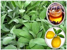 Domáci sirup od kašľa Cantaloupe, Spinach, Fruit, Vegetables, Plants, Food, Syrup, Essen, Vegetable Recipes