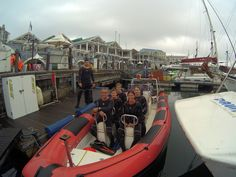 V&a Waterfront, Snorkelling, The V&a, Underwater World, Cape Town, Scuba Diving, Seal, Trips, Diving