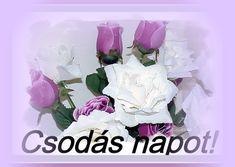 Good Morning Good Night, Good Day, Album, Buen Dia, Good Morning, Hapy Day, Card Book