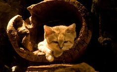 sand cat : Full HD Pictures 2560x1600