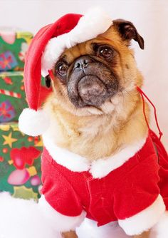 Merry Christmas Card Puppy Holiday Dogs Santa Claus Dog Puppies Xmas Pug Pugs