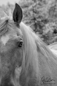 """Horse therapists with gentle senses help Thrivers to find their """"drag""""  - the beliefs and held fears that hold us all back."""