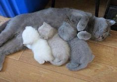 """""""The kitten color printer ran out of ink mid way through"""""""