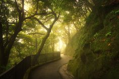 The Green Walk - Misty walk on Lugard Road, the Peak Hong Kong