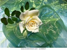 Delicate tea rose on green organza fabric Hybrid Tea Roses, Green Backgrounds, Nature Photos, Plant Leaves, Photo Editing, Royalty Free Stock Photos, Delicate, Victoria, Fabric