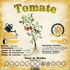 Tomate2.jpg (700×700)