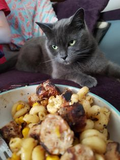 Nice bowl of pasta you got there  itd be a real shame if someone were to stick a paw in it  by DrIrisMarinusFenby cats kitten catsonweb cute adorable funny sleepy animals nature kitty cutie ca