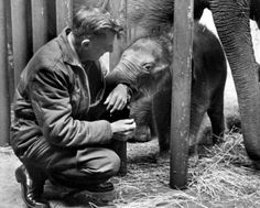 Veterinarian Matthew Maberry with  Packy the elephant at the Oregon Zoo. Dr. Maberry helped deliver Packy on April 14, 1962. At the time of his birth, he was the first Asian elephant born in North America in 44 years. Packy turns 50 this weekend and will be celebrated with a party in his honor. Dr. Maberry recently passed away.