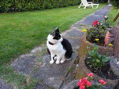 Tommy Katze Cat