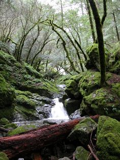 Cataract Falls - Marin