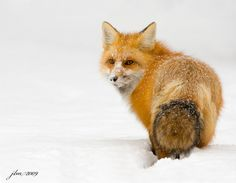 What a beautiful sweetheart  dusted With Snow by Judylynn Malloch, via 500px