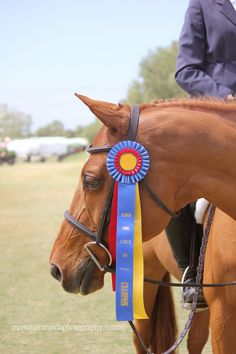 martinamirandaphotography:  Bentley proudly displaying his Champion ribbon, Blenheim Spring Classic III, 2014