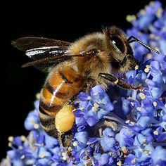 Bees in Agriculture - What's the Buzz?