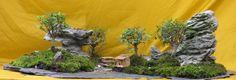 bonsai art #garden