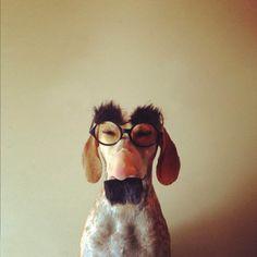 O melhor modelo de cachorro que um dono fotógrafo poderia querer!