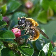 Working bee - Clickasnap - The world's largest, free to use, paid per view, image sharing platform 0 Image, Image Types, View Image, Working Bee, Pay Per View, Nature View, Image Sharing, My Photos, Thats Not My