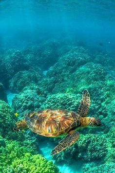 Underwater Treasures Sea Turtle