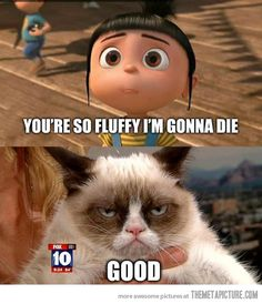 Haha! I can't get enough of the grumpy cat :)