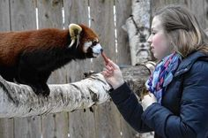 Visiting the Utica Zoo? Here's what you need to know
