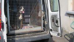 De Facebook à la SPA: la maltraitance animale pointée par des riverains à Maubeuge http://vdn.lv/Bk4kmq