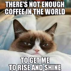Not enough coffee in the world grump cat memes meme funny quotes grumpy cat humor good morning mornings coffee humor morning humor