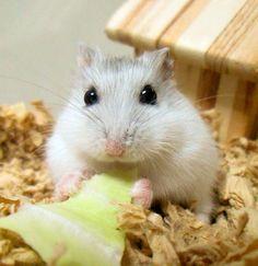 minimalland  Hamster sweetness -