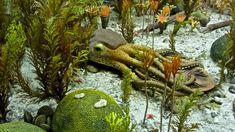 Tudja-e, hogy melyik Magyarország legrégebbi óceánja? Animals, Animales, Animaux, Animal, Animais