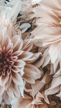 Flower Phone Wallpaper, Iphone Background Wallpaper, Aesthetic Iphone Wallpaper, Aesthetic Wallpapers, Pink Wallpaper, Spring Flowers Wallpaper, Vintage Flowers Wallpaper, Aztec Wallpaper, Glitter Wallpaper