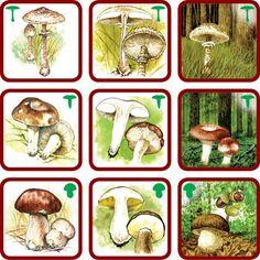 Pexetrio Poznáš naše huby? | edukacnehracky.sk Drake, Montessori, Animals, Puzzle, Naturaleza, Fall, Animales, Puzzles, Animaux