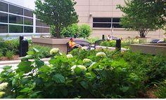 Healing garden research earns award for Ph.D. student - ArchONE