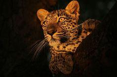 Wildlife Stock Photos Top 10 From 500px
