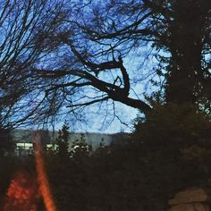 Driving home from work tonight I spot a dragon in the tree. Can you see him? In The Tree, My Photos, Dragon, Canning, Sunset, Instagram Posts, Outdoor, Outdoors, Dragons