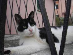blog di Sara: Miro, gatto amoroso