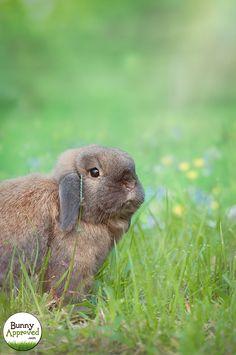 Bailey is a beauty! Sunshine rabbit.